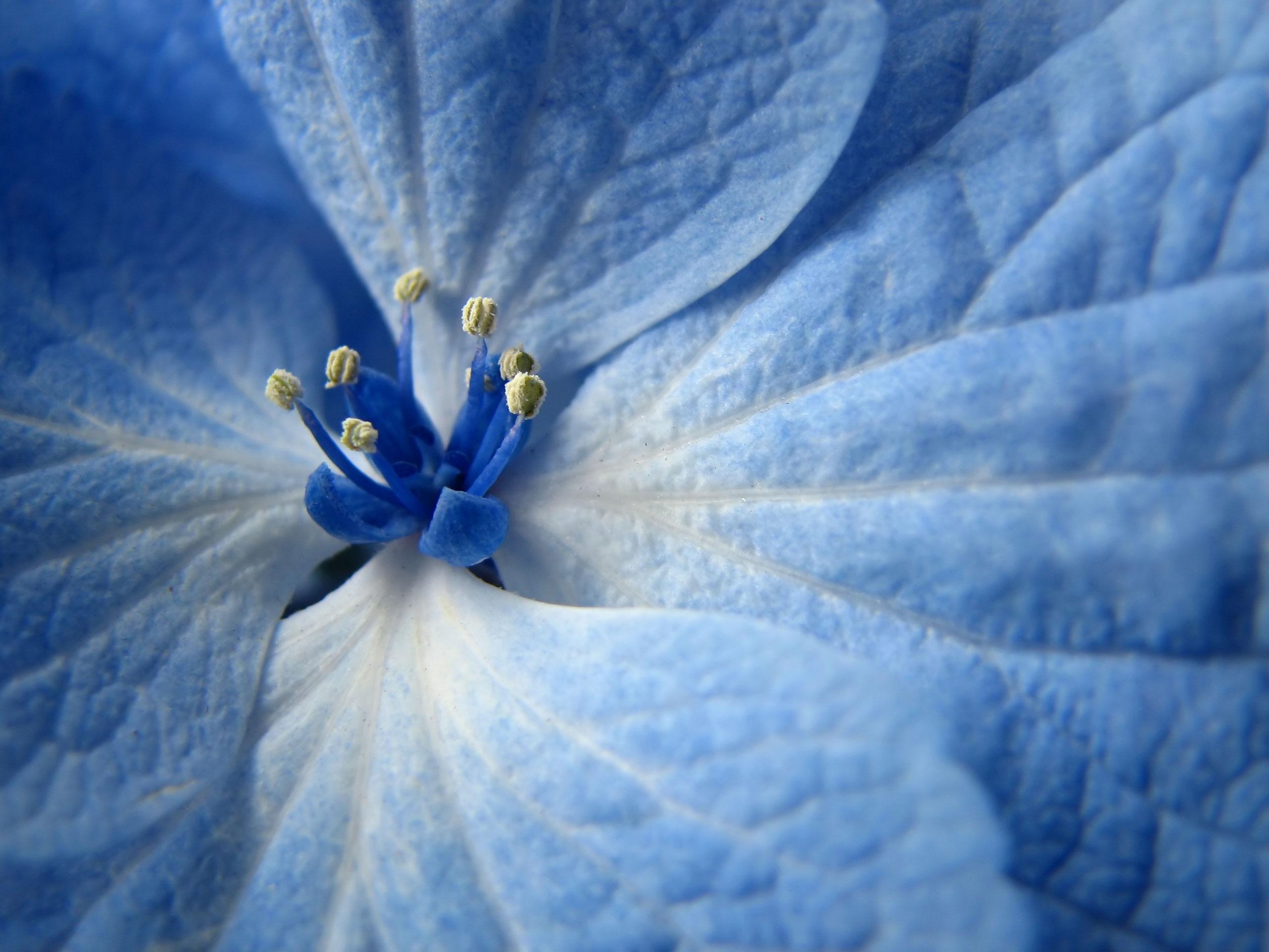 47 Blue Floral Wallpaper For Walls On Wallpapersafari