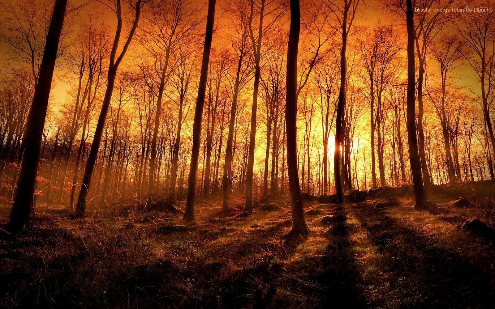 Forest Fire Wallpaper - WallpaperSafari
