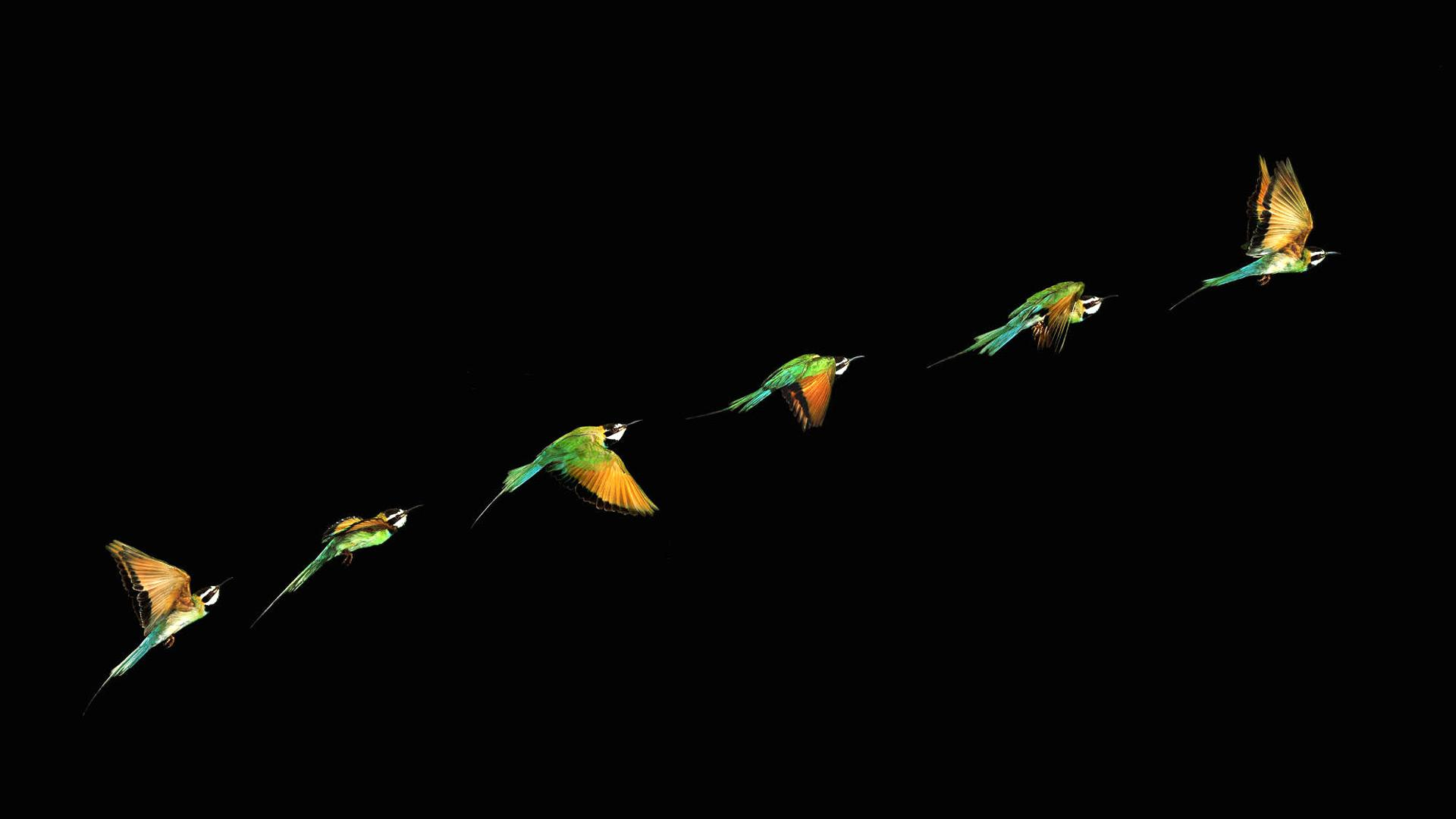 wallpaper birds wallpapers 1920x1080 1920x1080