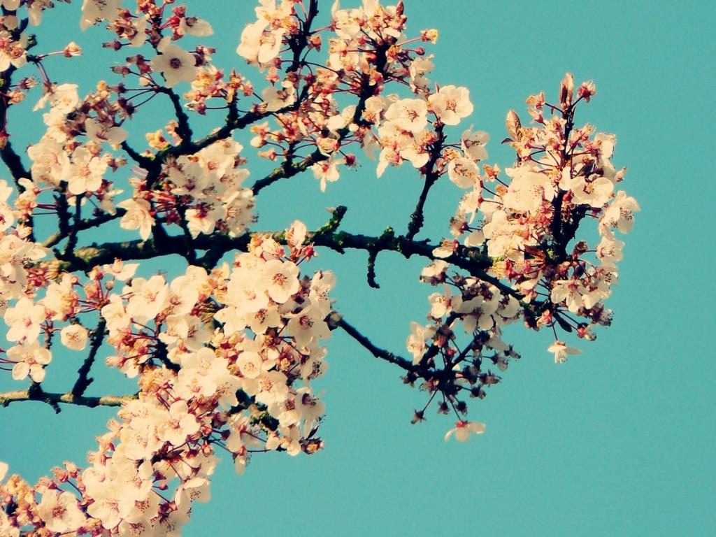spring film 1440x900 wallpaper Wallpaper Wallpapers Download 1024x768