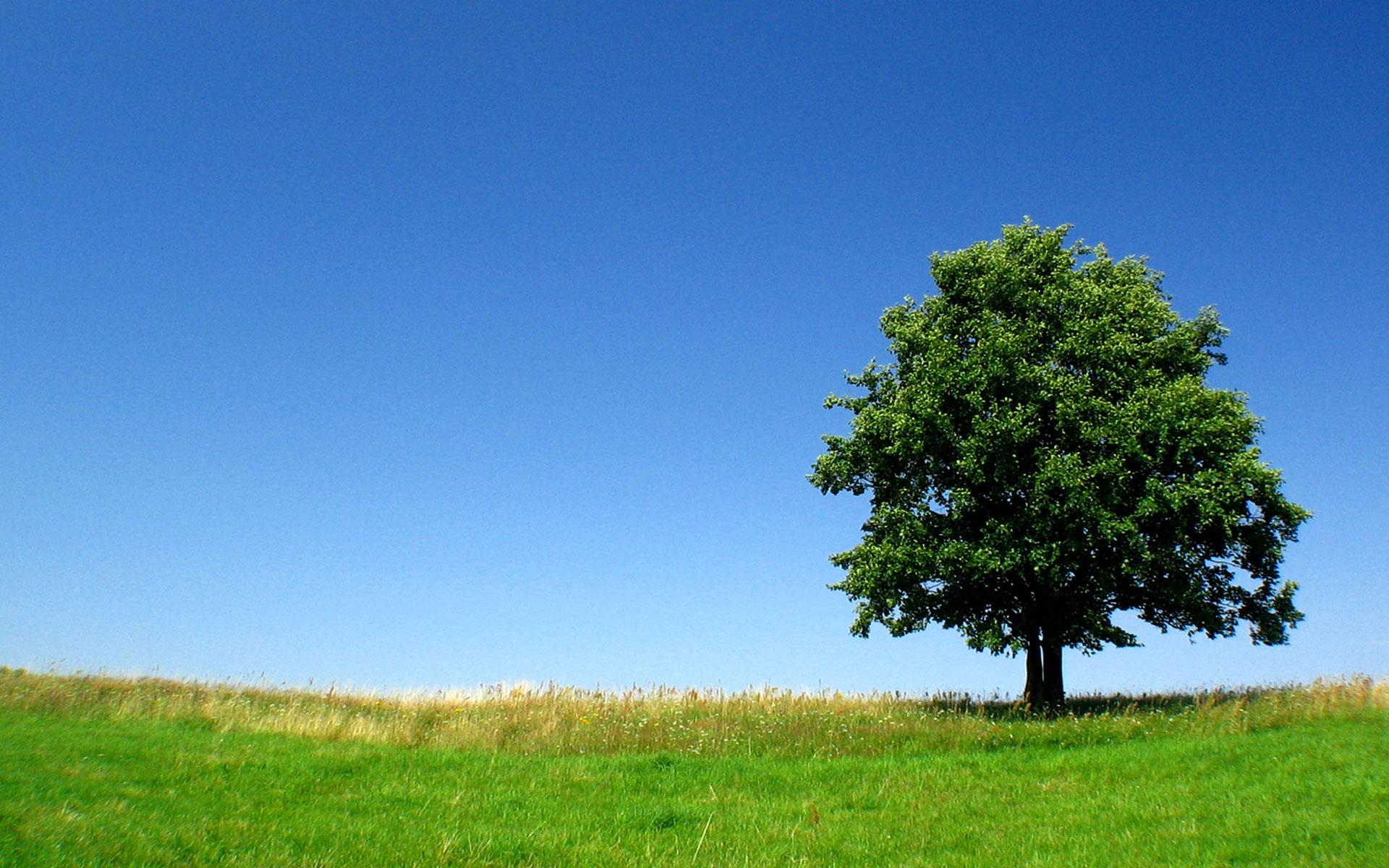 Beautiful Tree   Wallpaper 31613 1920x1200