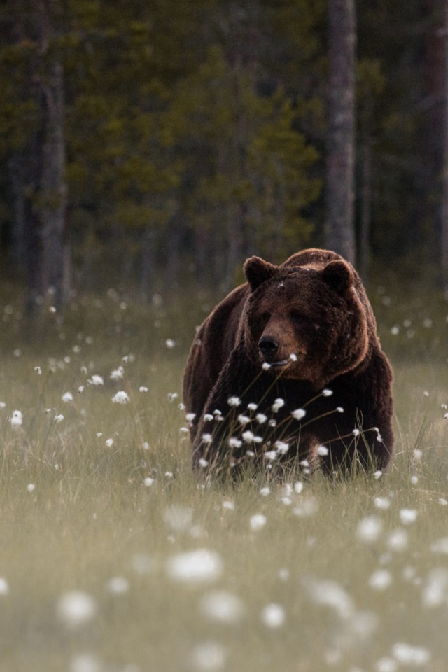 47 Bear Iphone Wallpaper On Wallpapersafari