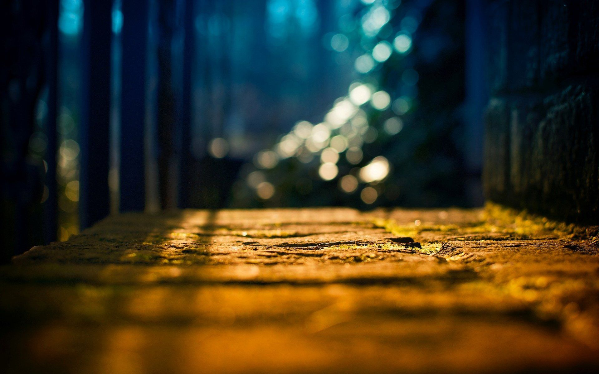 close up land light tree sun blur bokeh background wallpaper 1920x1200