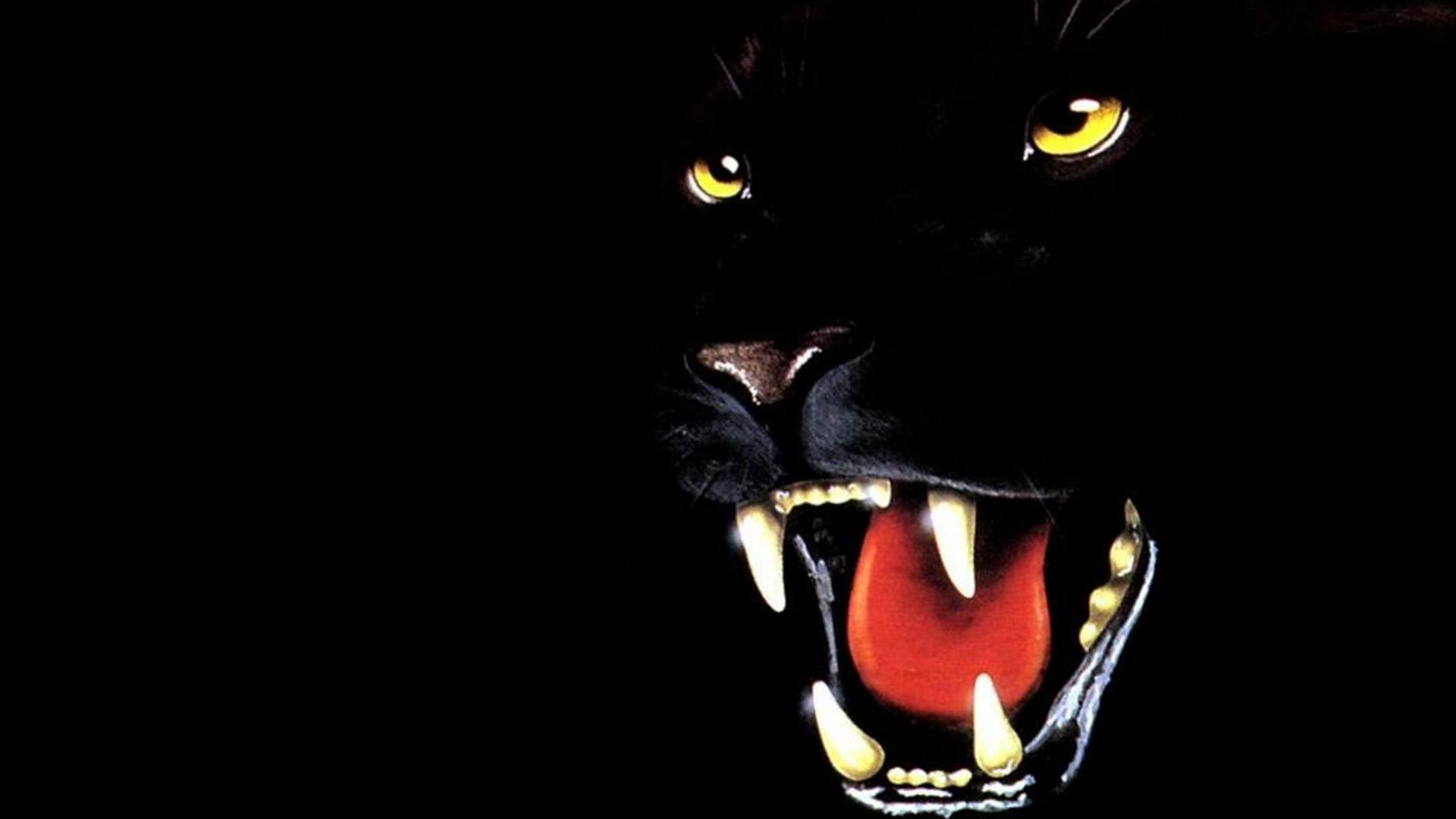 Sfondo Pantera Nera Testa   1920 x 1080   Animali Cuccioli 1920x1080