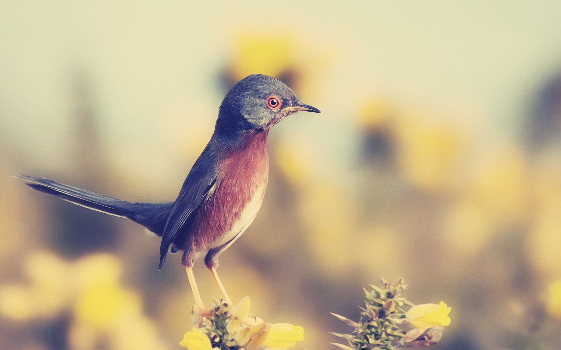 Beautiful Small Bird Looking Seriously HD Wallpapers 1920x1200