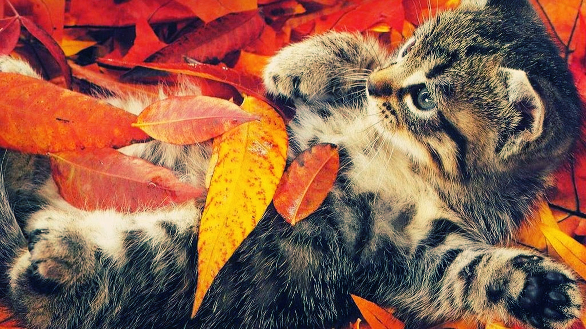 autumn wallpaper life animal wallpapers backgrounds 1920x1080