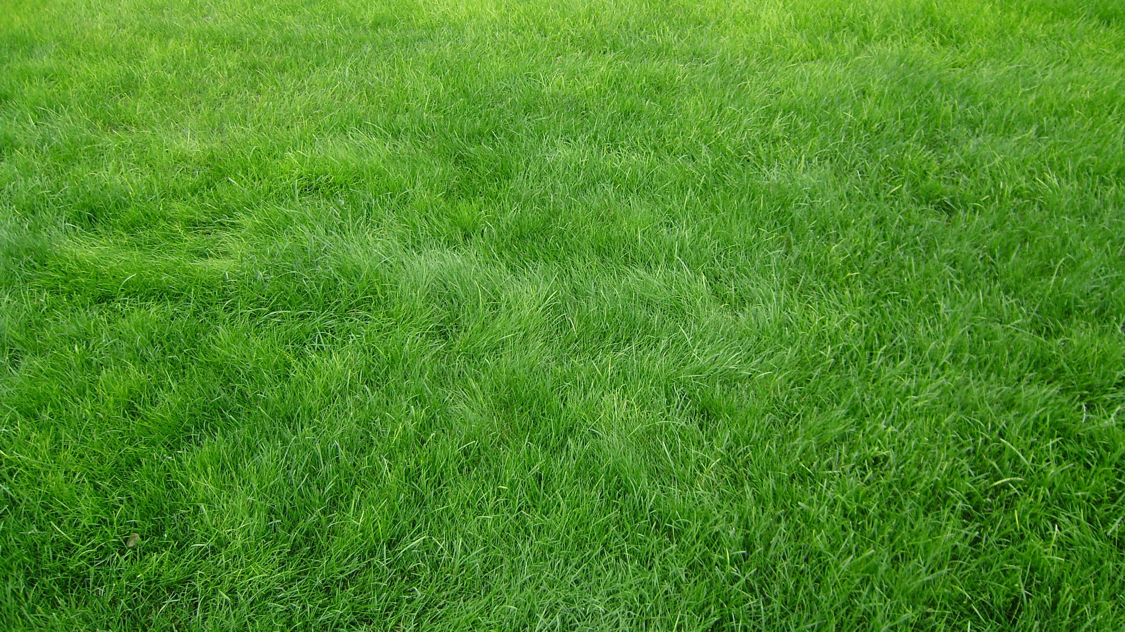 green grass background - HD2048×1152