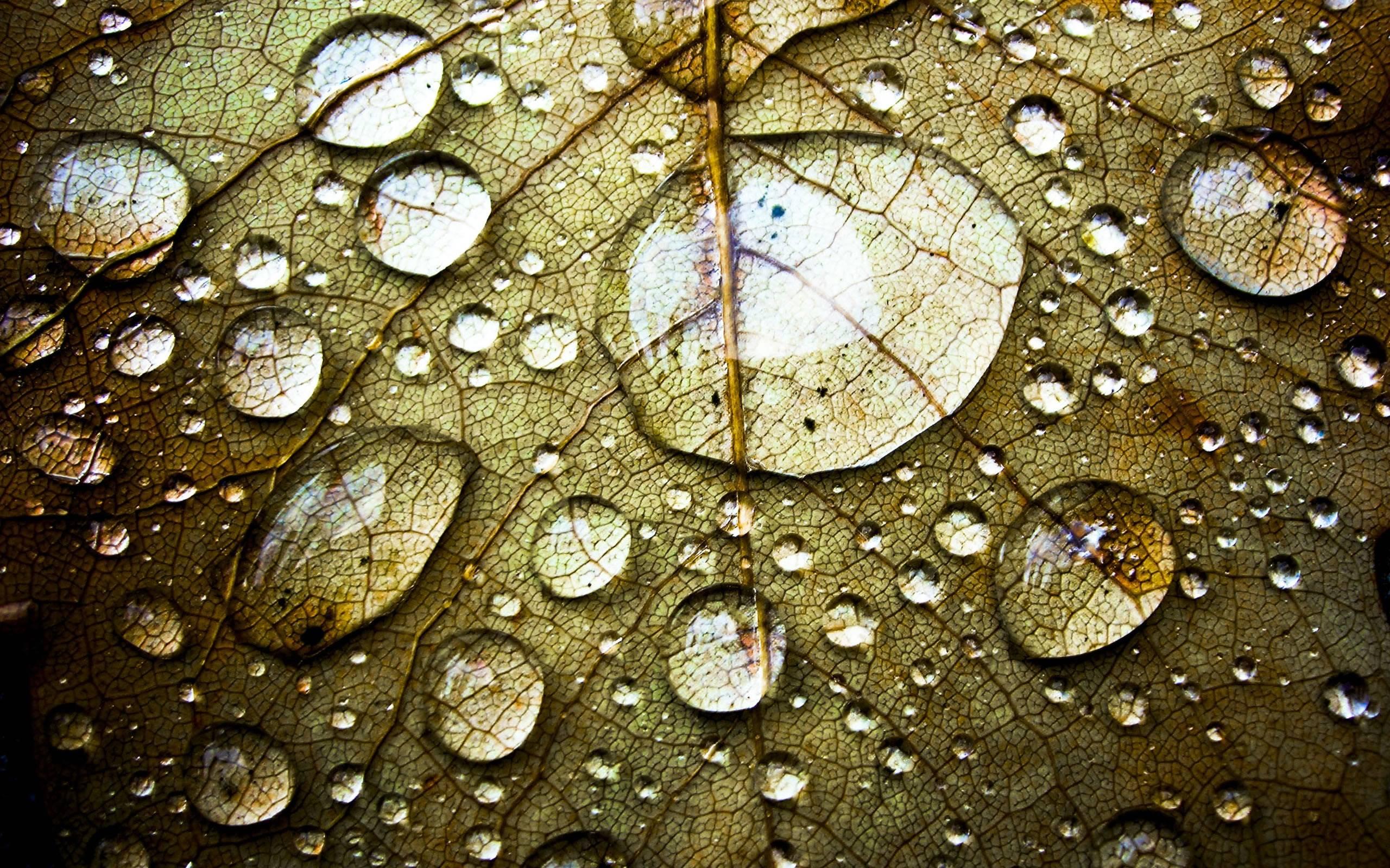 Water Drop HD Wallpapers 2560x1600