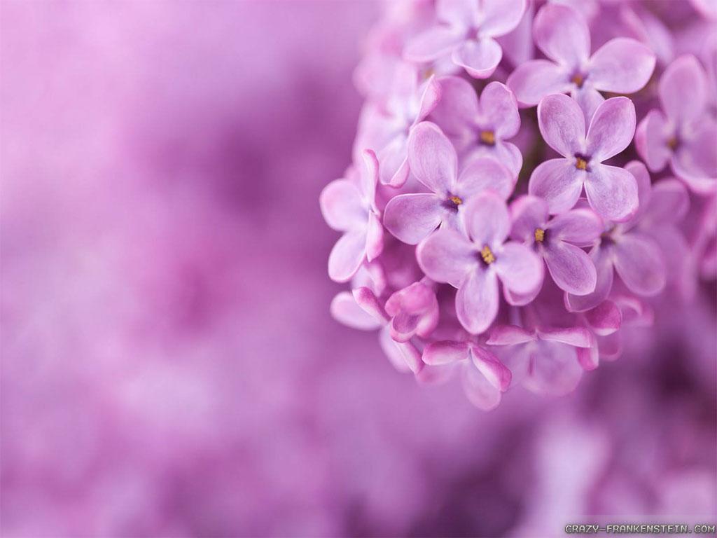 pretty flowers backgrounds  wallpapersafari, Beautiful flower