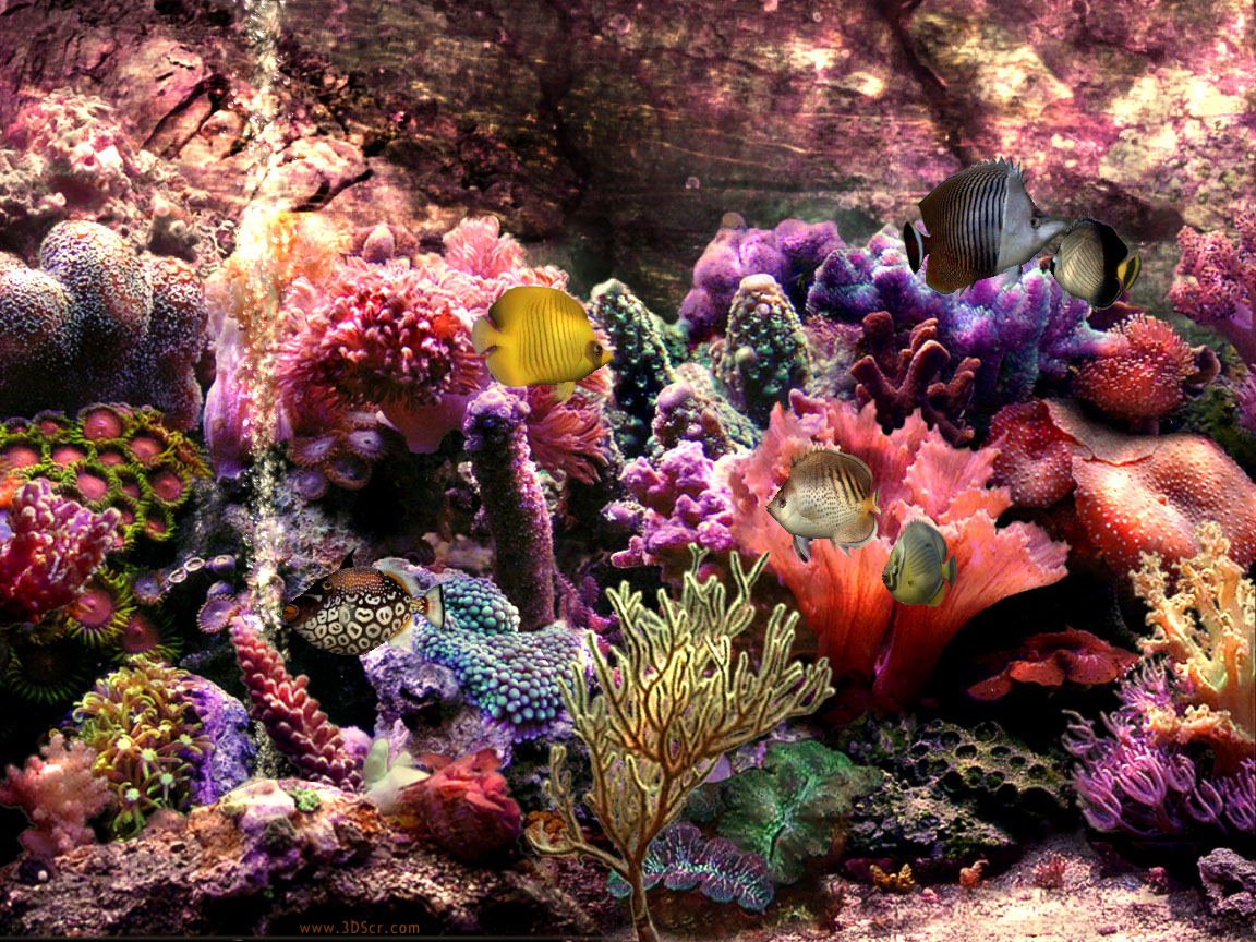 colorful coral reef wallpaper