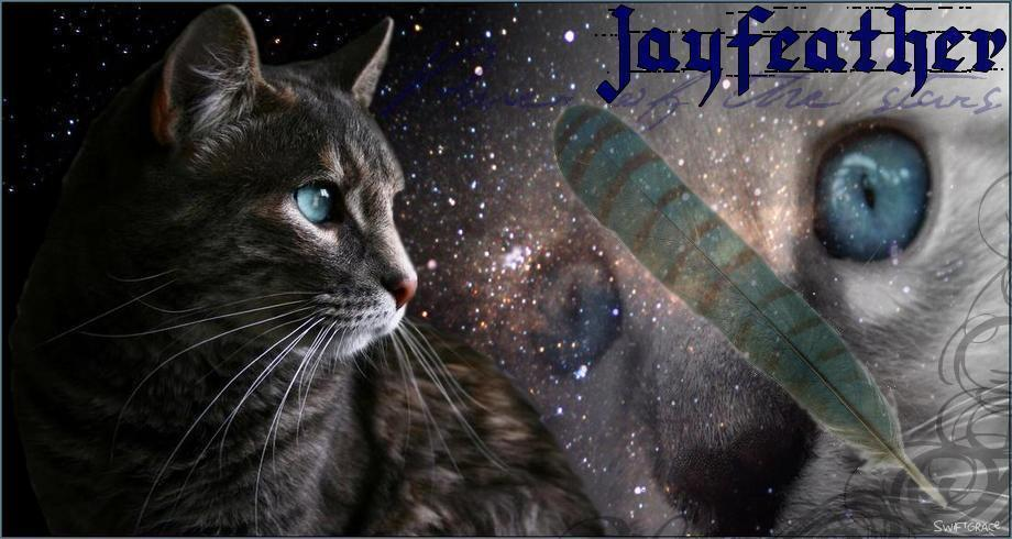 Warrior Cats Wallpaper Jayfeather Jayfeather warrior cat  by 920x490