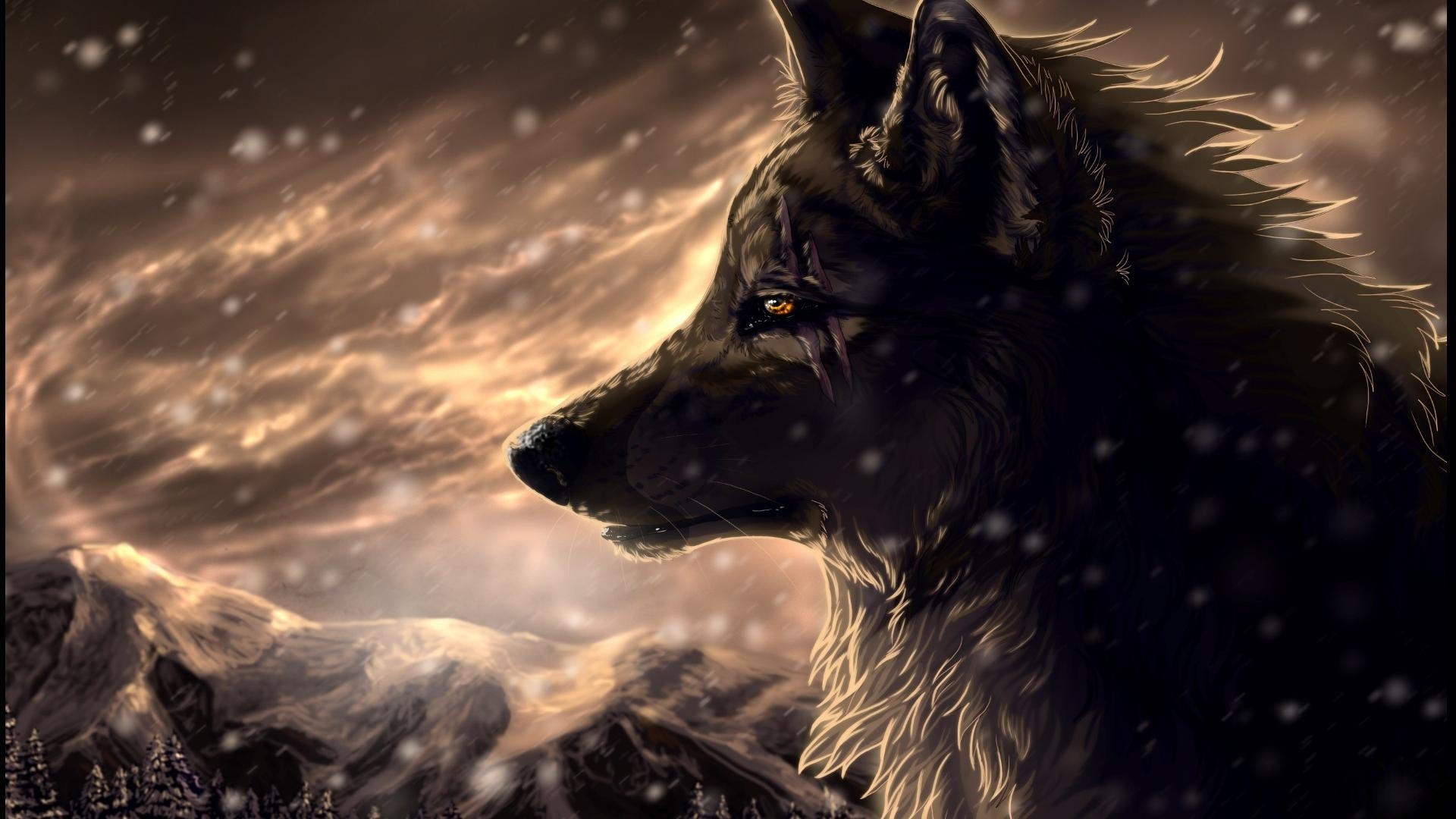 Download Wolf Download Wallpaper 1920x1080 46 Wolf Wallpapers