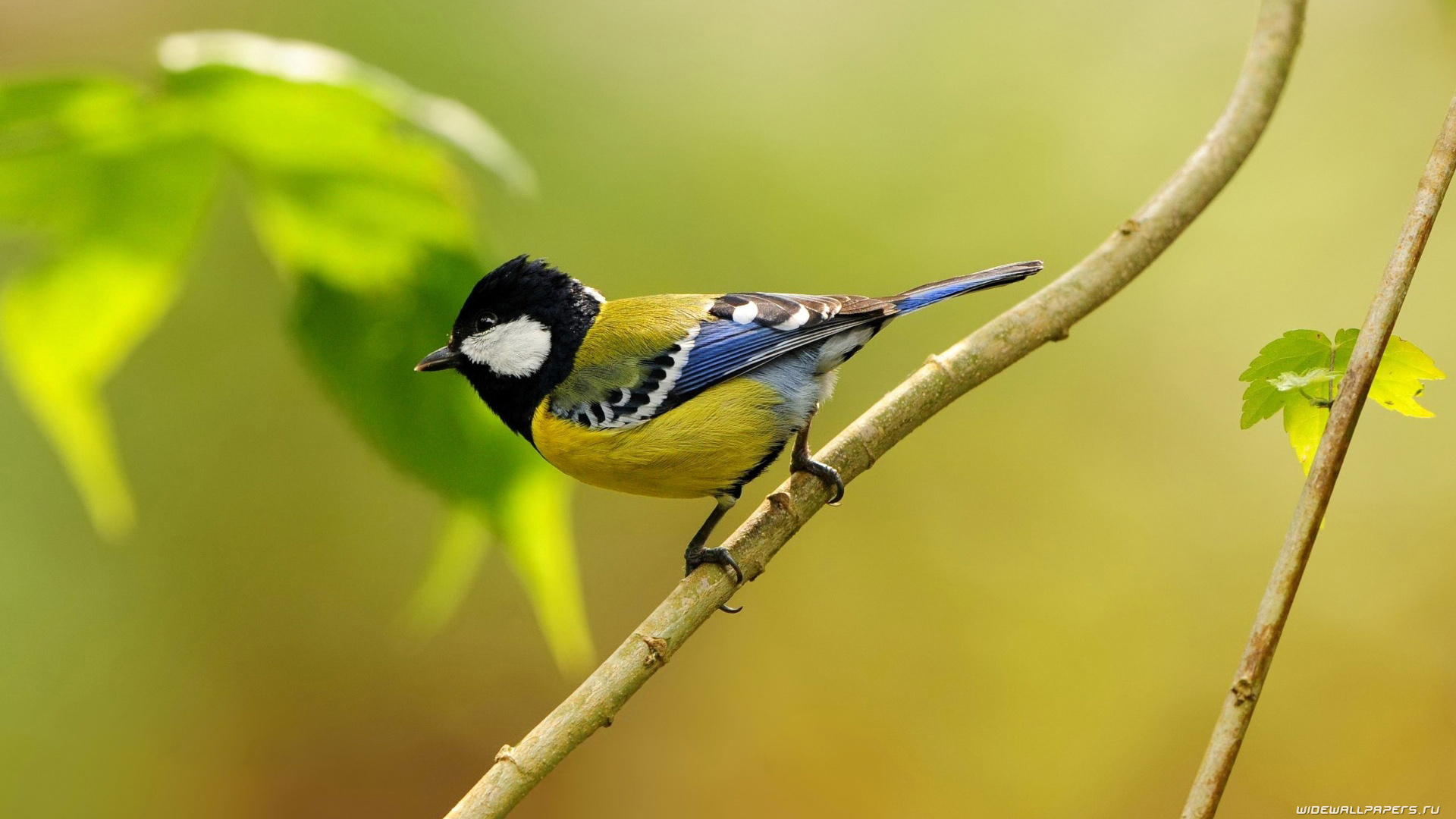 selection of 10 Images of Birds in HD quality 1920x1080