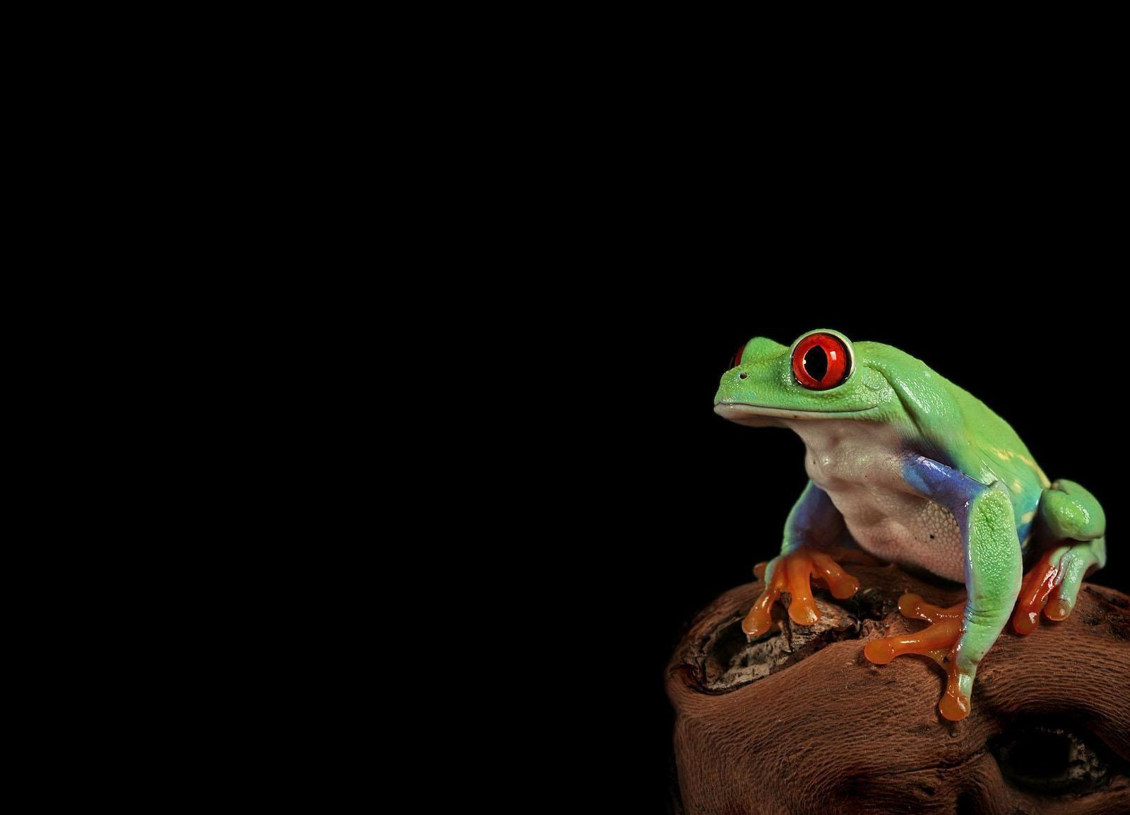 жаба лист фон  № 3164620  скачать