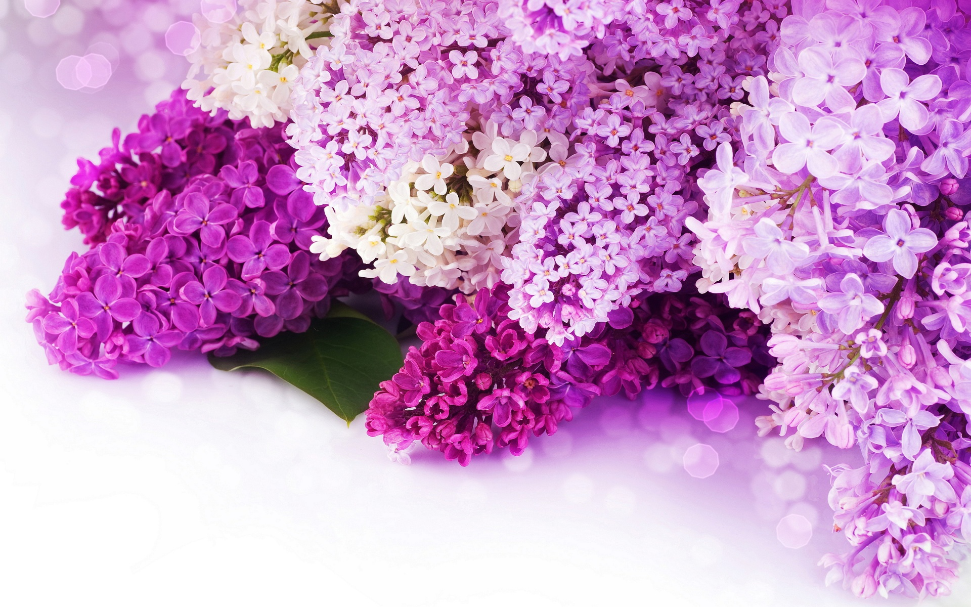 Pink and Purple Flower Background hd wallpaper background desktop 1920x1200