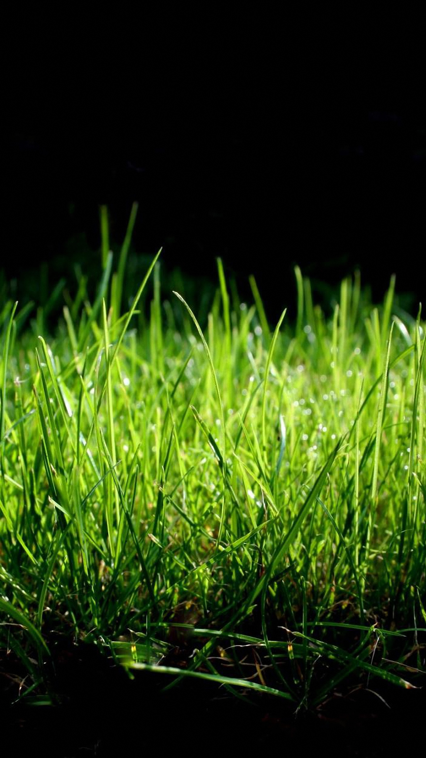 lg g3 wallpapers 1440x2560 quad hd green grass 1440x2560