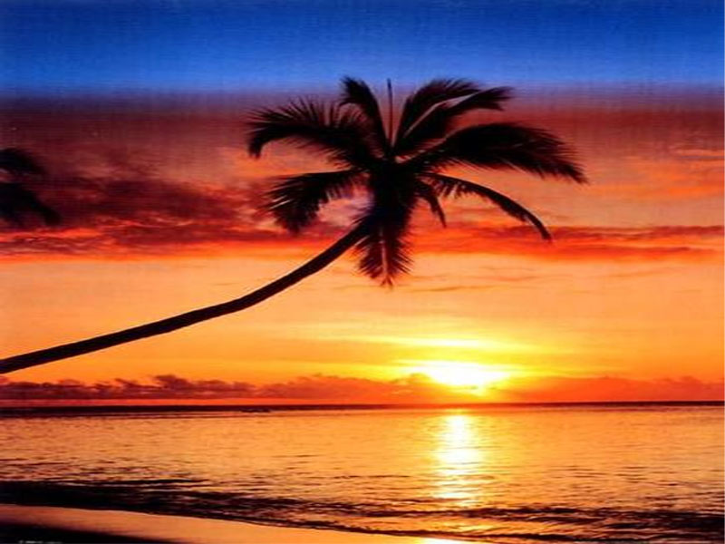 palm trees sunset hd wallpapers palm trees sunset wallpapers palm 800x600