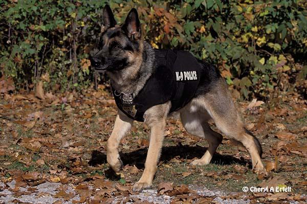 Police Dog Wallpaper German shepherd police dog 21 600x399