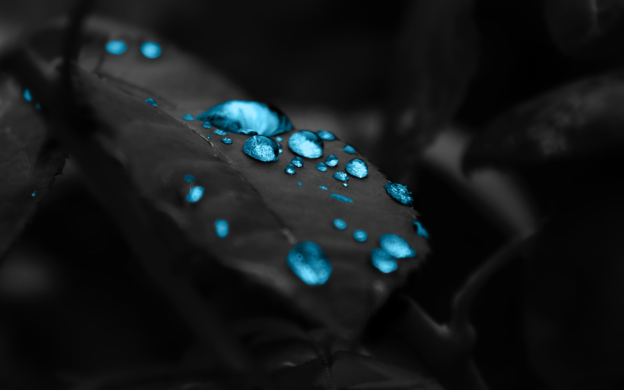 Glowing Blue Water Drops On Leaves Hd Wallpaper Wallpaper List 2560x1600
