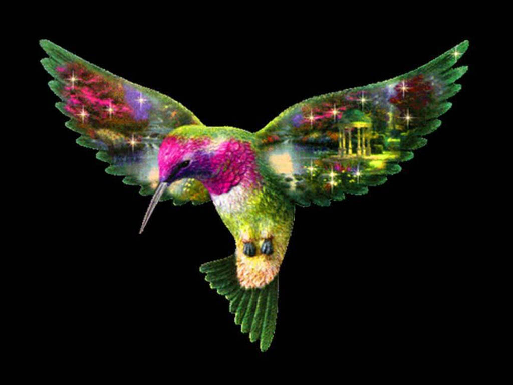 Download Free Hummingbird Wallpapers: Free Hummingbird Desktop Wallpaper