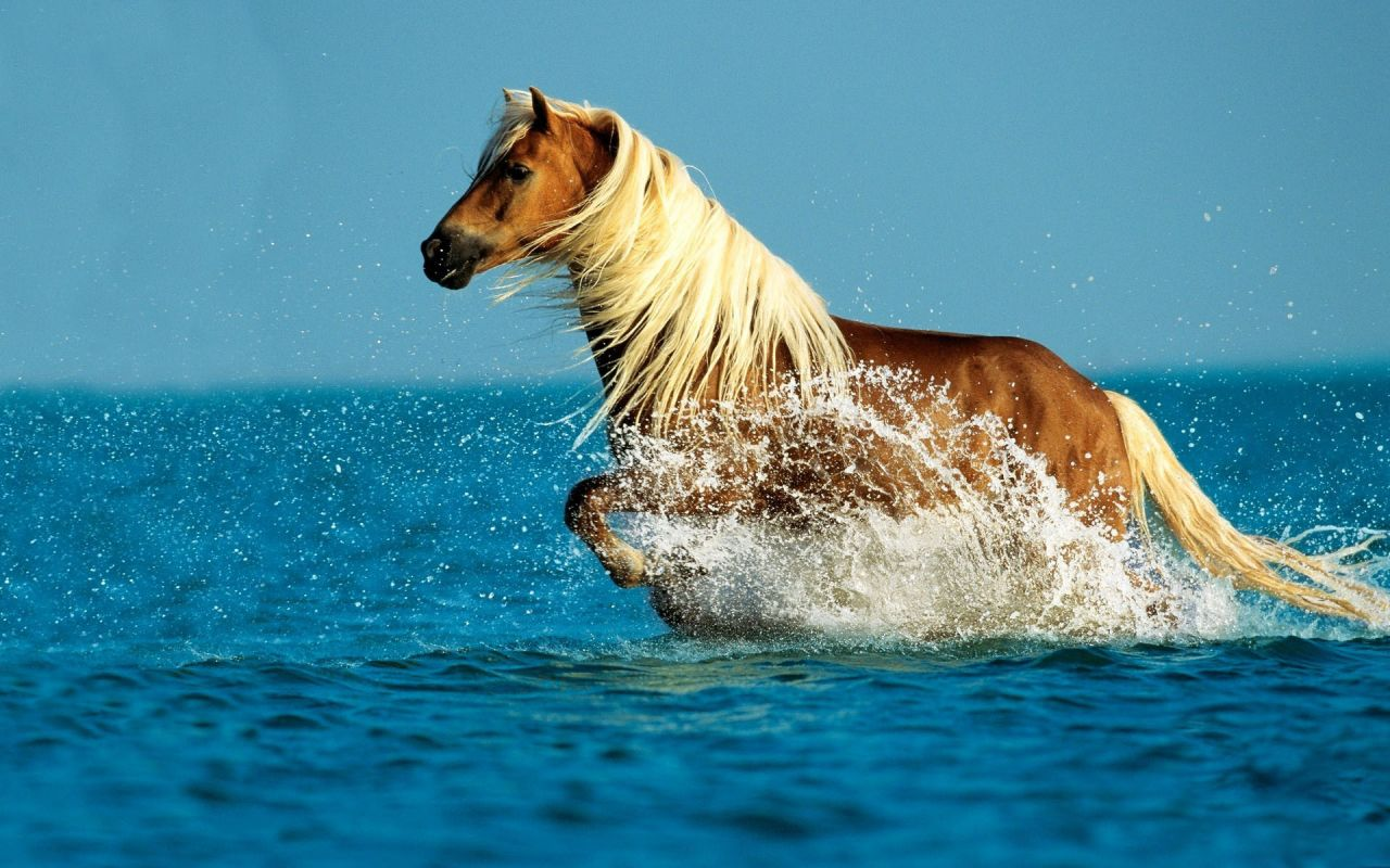 wallpapers horse wallpapers cal wallpapers horses 1280x800