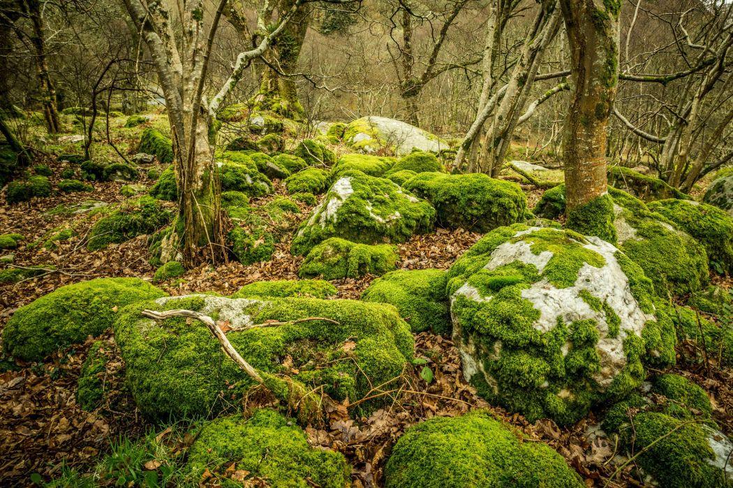 Stones moss leaves trees Glendalough Ireland Upper Lake 1050x700