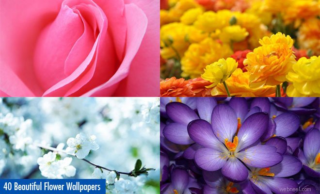 flowers hope you love our collection of beautiful flower wallpapers 660x400