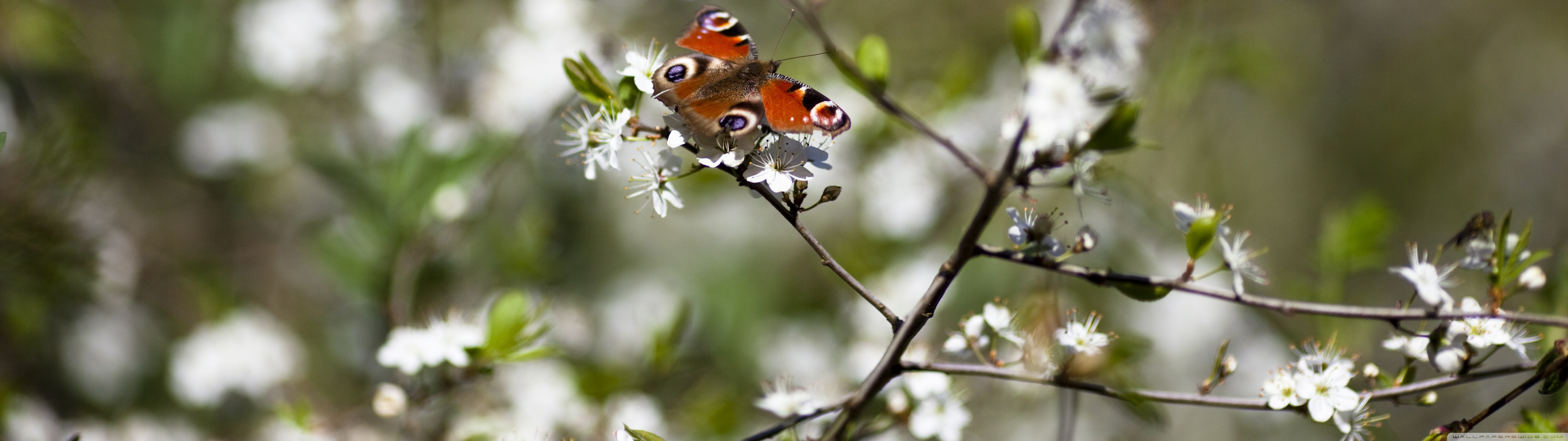 Butterfly Springtime Wallpaper 51201440 160550 HD Wallpaper Res 5120x1440
