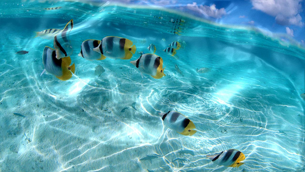 Free Download Watery Live Wallpaper Pc 1280x720 Pixel