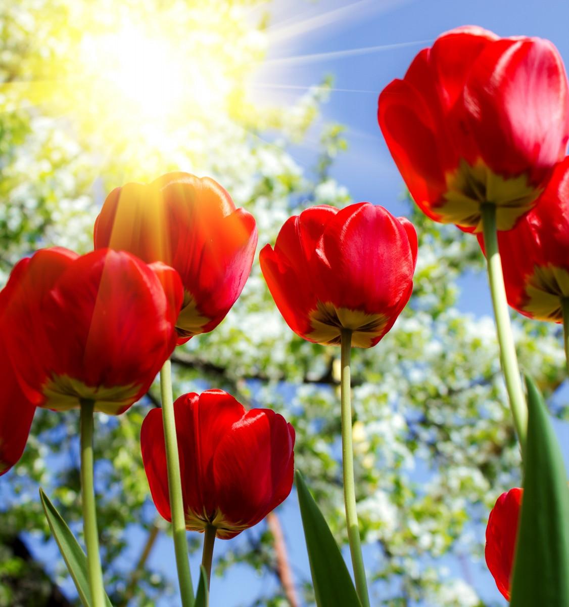 Beautiful Spring Flowers Wallpapers Wallpapersafari