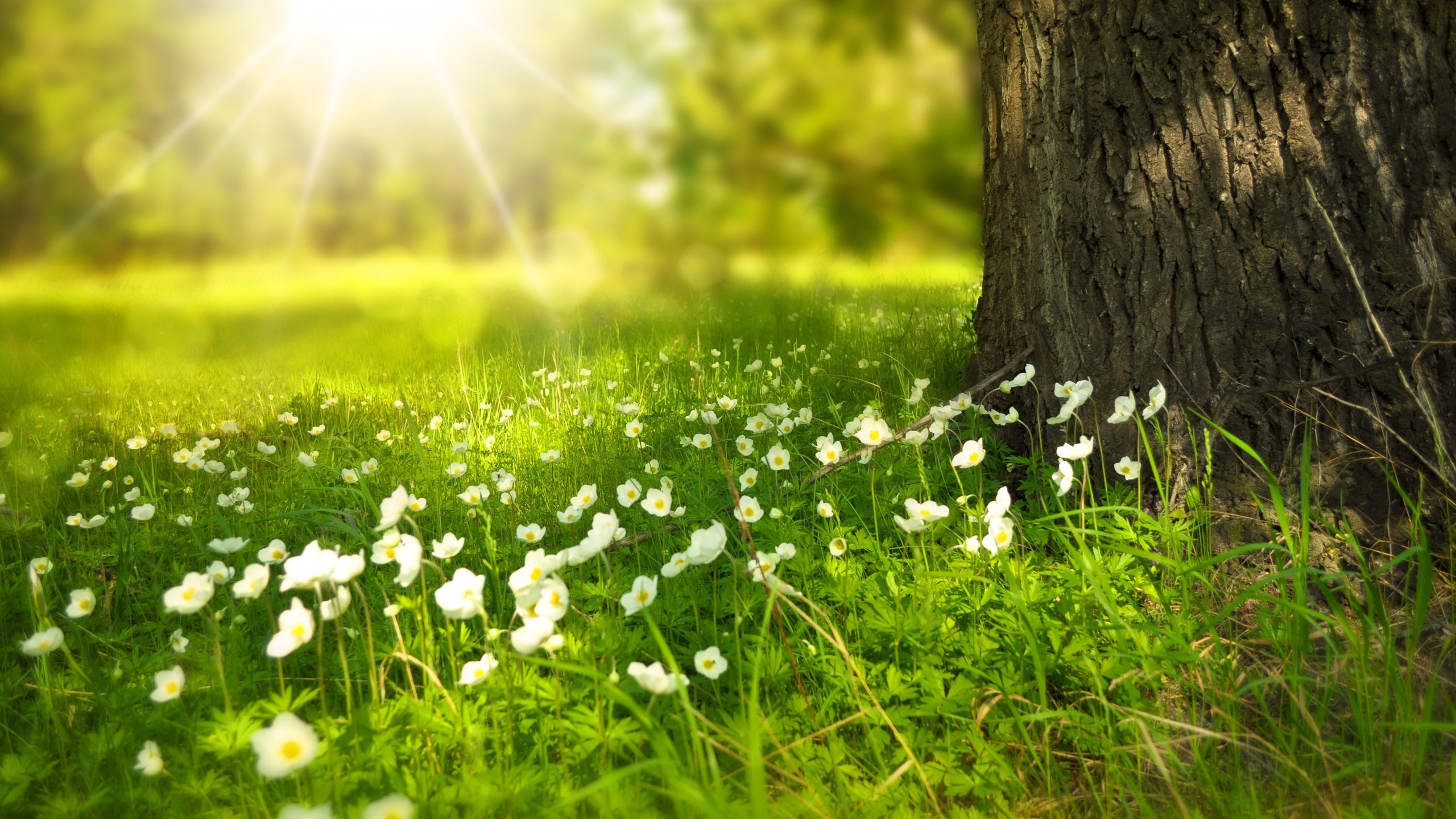 Screen Desktop Spring Wallpaper HD Download High Definiton 2560x1440