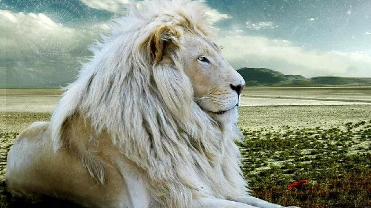 Free Download White Lions Wallpaper For Desktop And Mobile Devices Images, Photos, Reviews