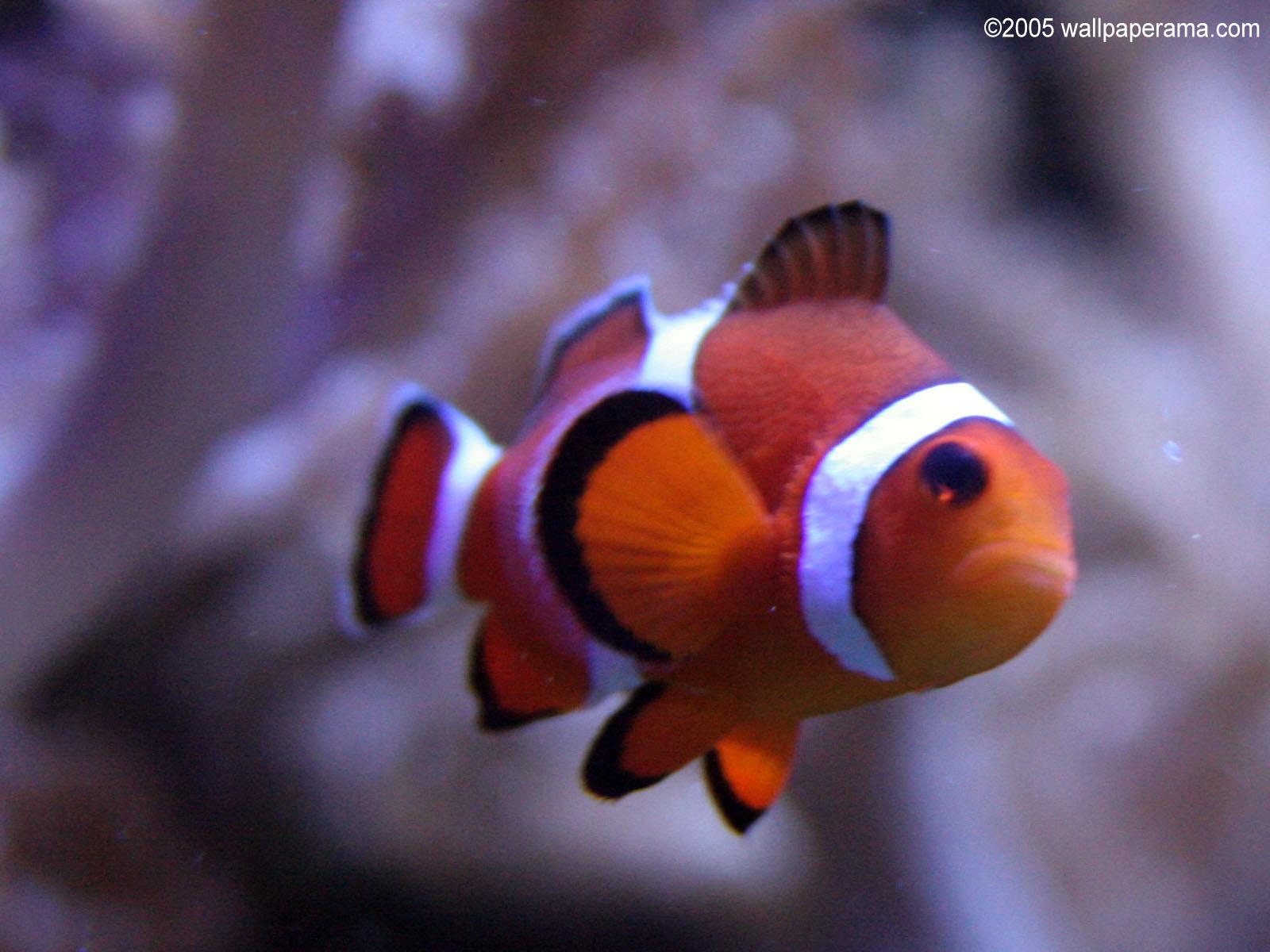 1600x1200 evil fish desktop - photo #21