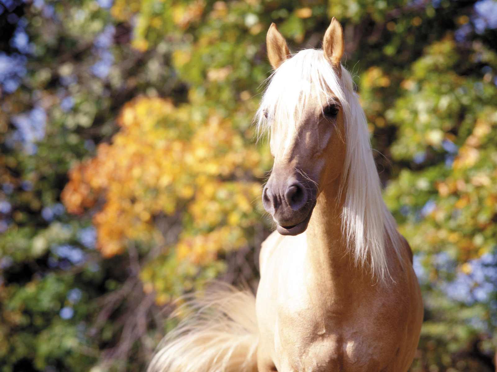 Related Searches for horse desktop wallpaper 1600x1200