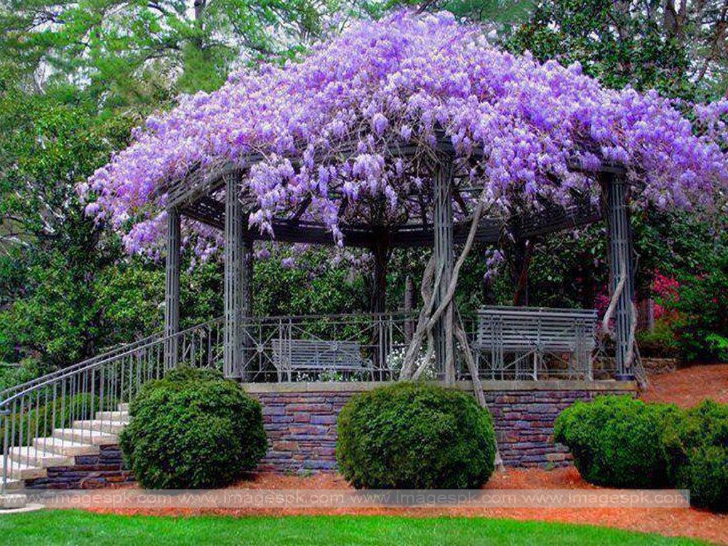Beautiful Spring Wallpaper   Imagespkcom 1024x768
