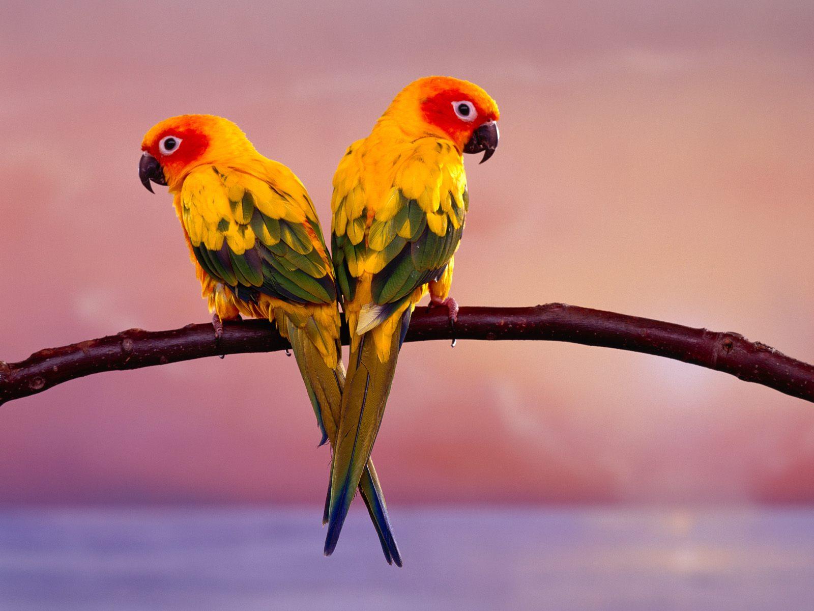 birds wallpapers hd bird wallpaper hd birds wallpapers bird hd 1600x1200