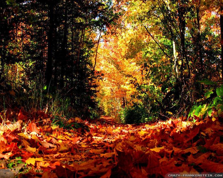 Fall Season wallpaper   ForWallpapercom 757x606