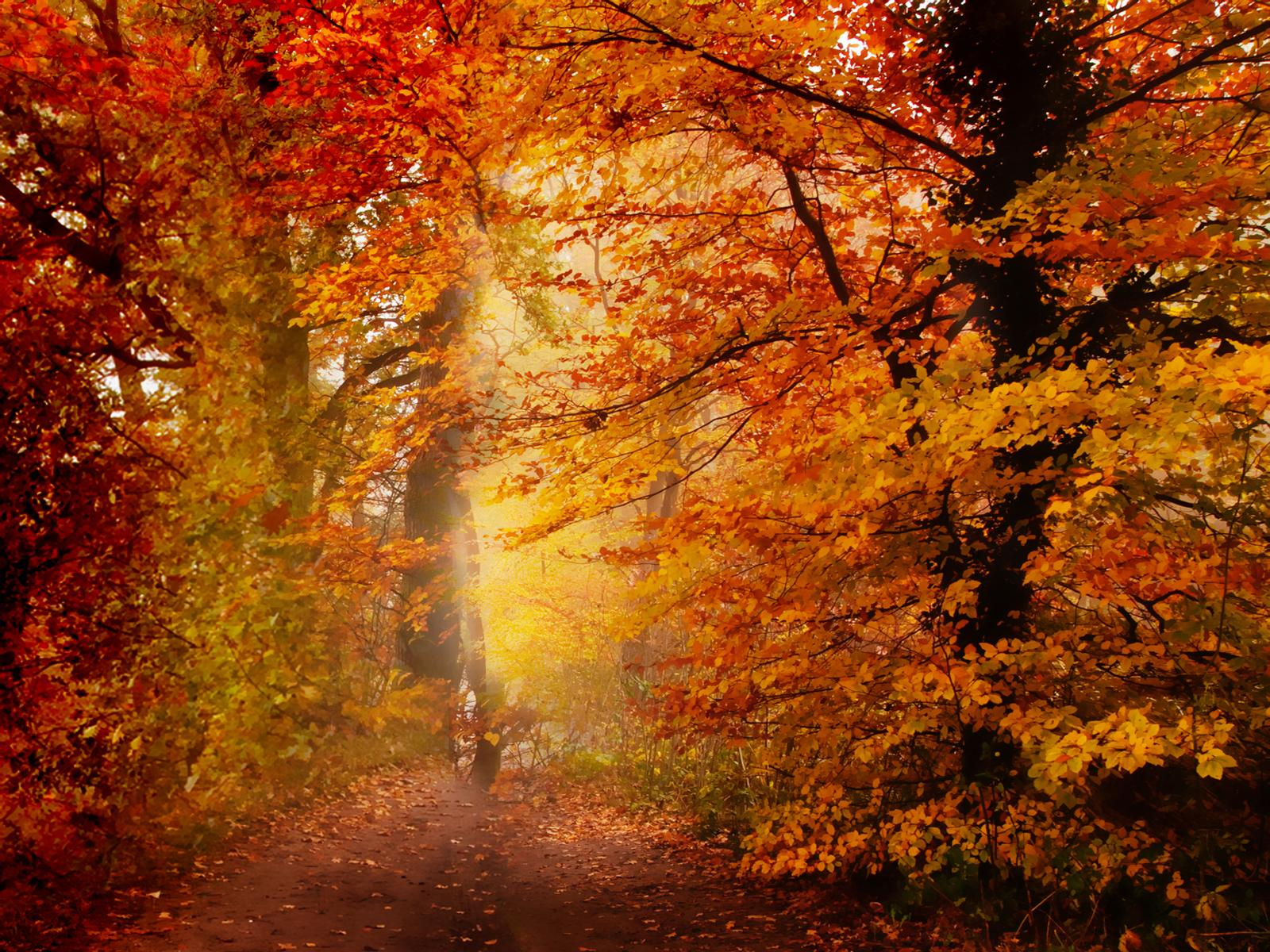 37 New England Autumn Wallpaper On Wallpapersafari