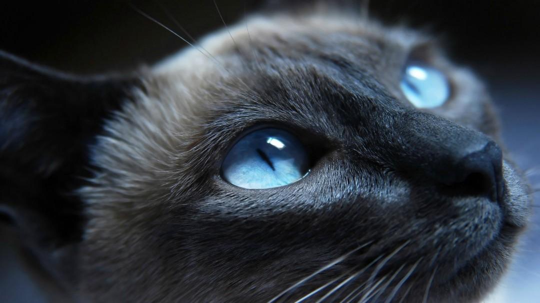 Black Grumpy Cat Images HD Wallpaper HD Wallpaper of   hdwallpaper2013 1080x607