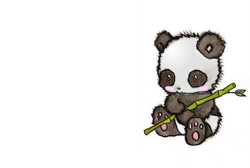 Panda Wallpaper 1920x1080 Download