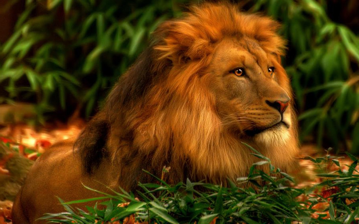 Animals Lion Wallpapers Hd Desktop And Mobile Backgrounds: Black Lion HD Wallpaper