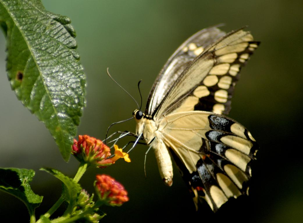 48+ Moving Butterfly Wallpaper on WallpaperSafari