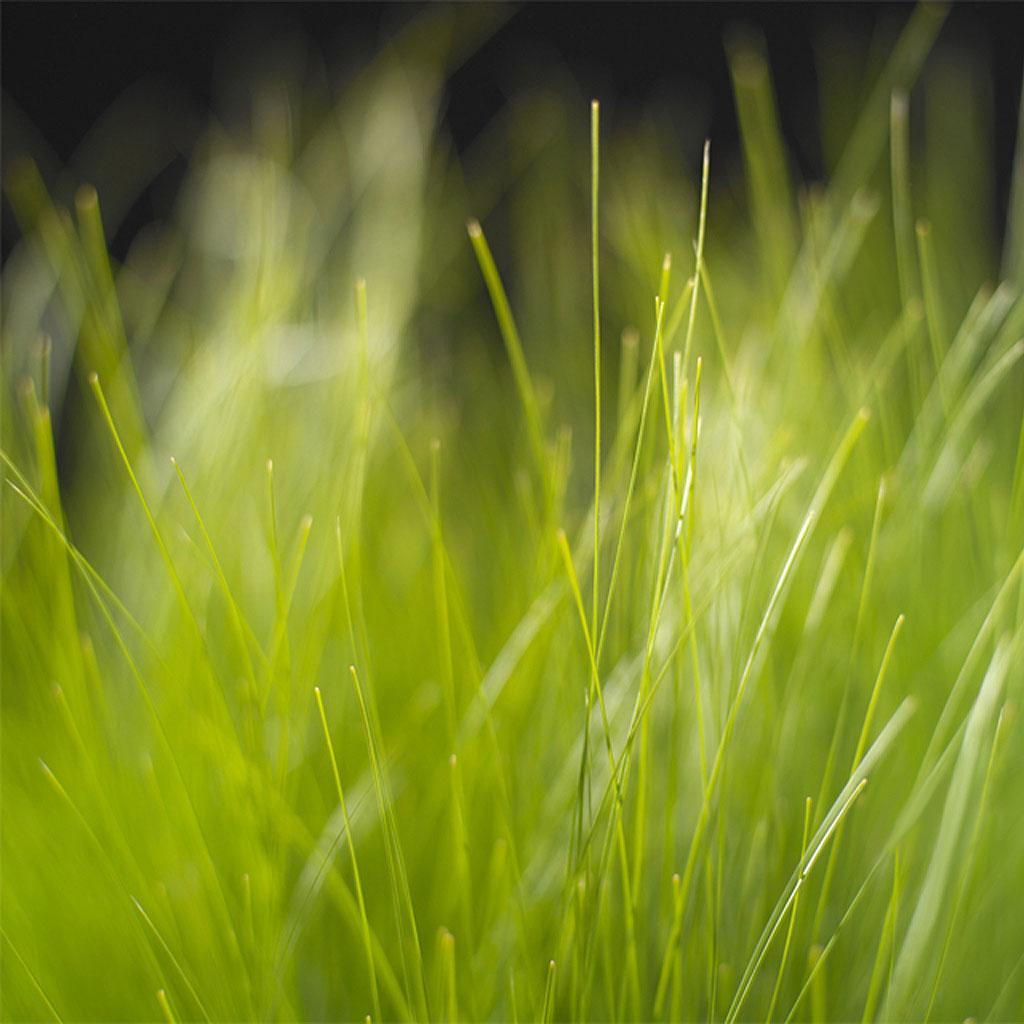 Green grass ipad wallpaper to download 1024x1024