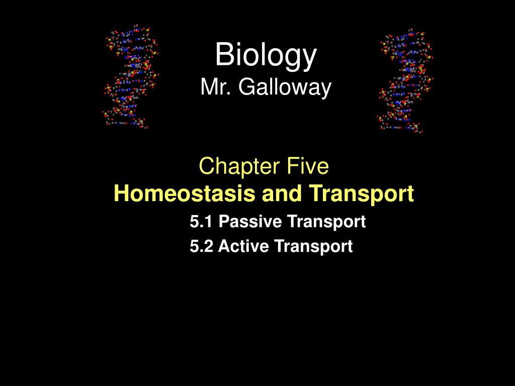 PPT   Chapter Five Homeostasis and Transport 51 Passive Transport 1024x768
