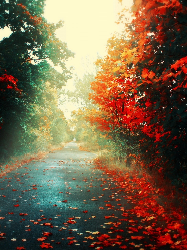 768x1024 Fallen Leaves In Autumn Ipad mini wallpaper 768x1024
