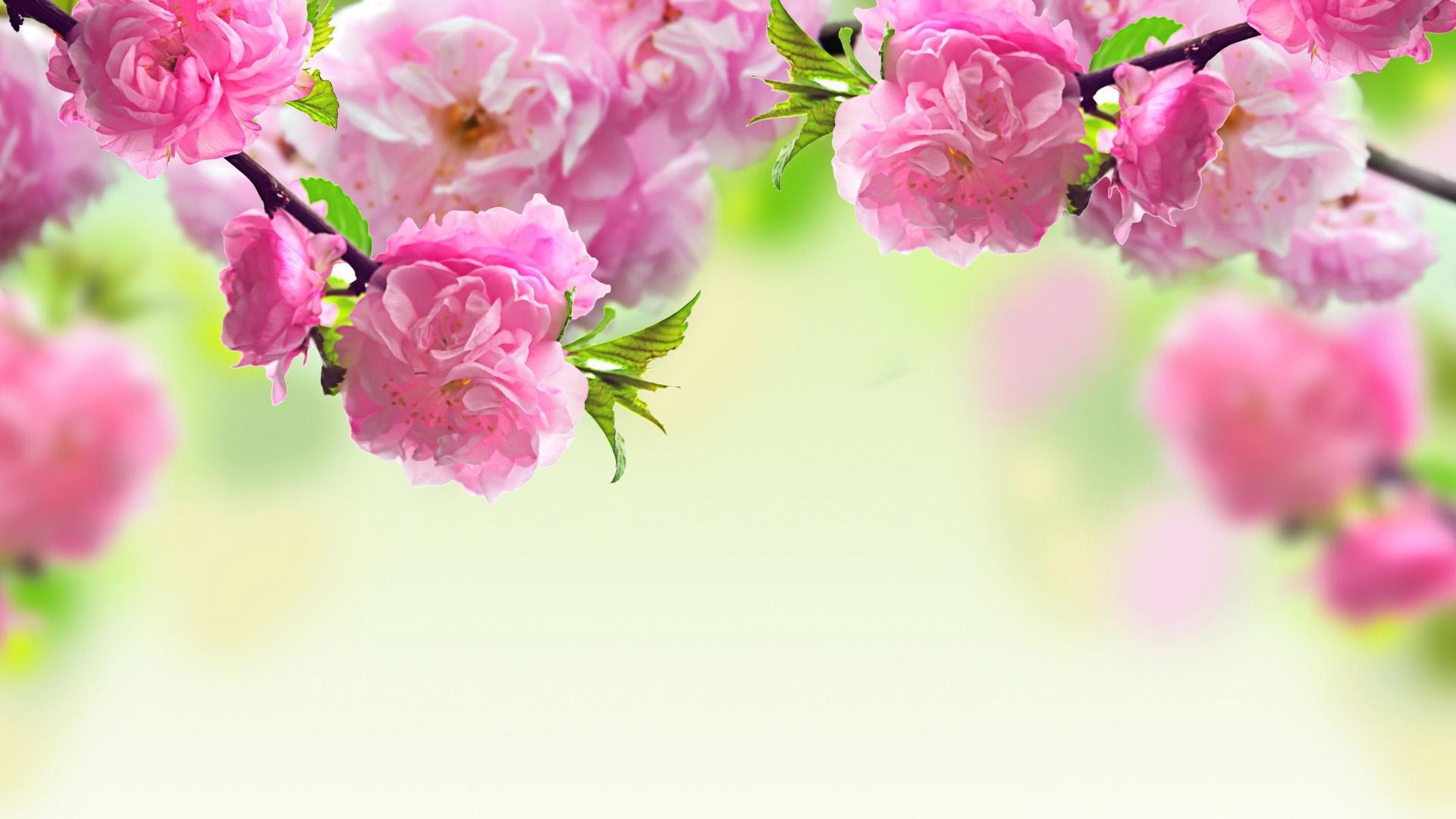 flower wallpapers desktop wallpaper spring flower widescreen 1920x1080