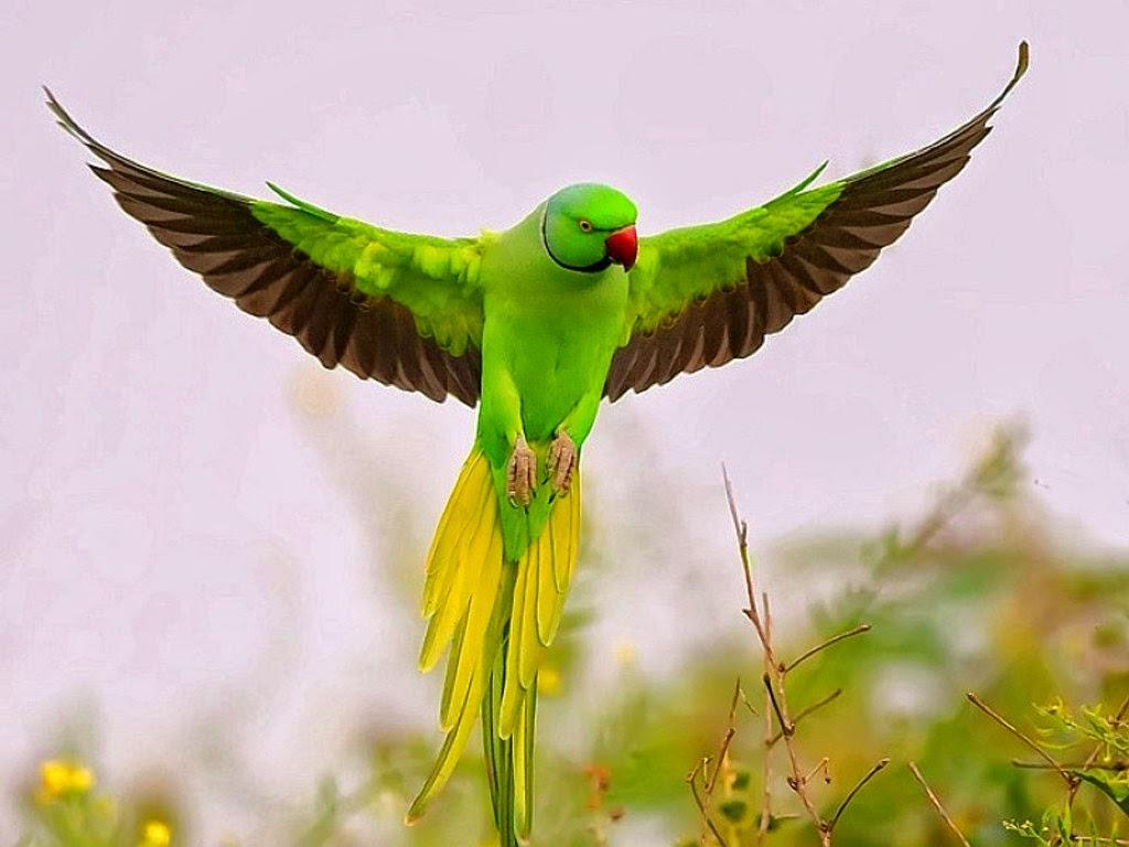 labels birds bird wallpapers cute parrot parrot parrot hd wallpapers 1024x768