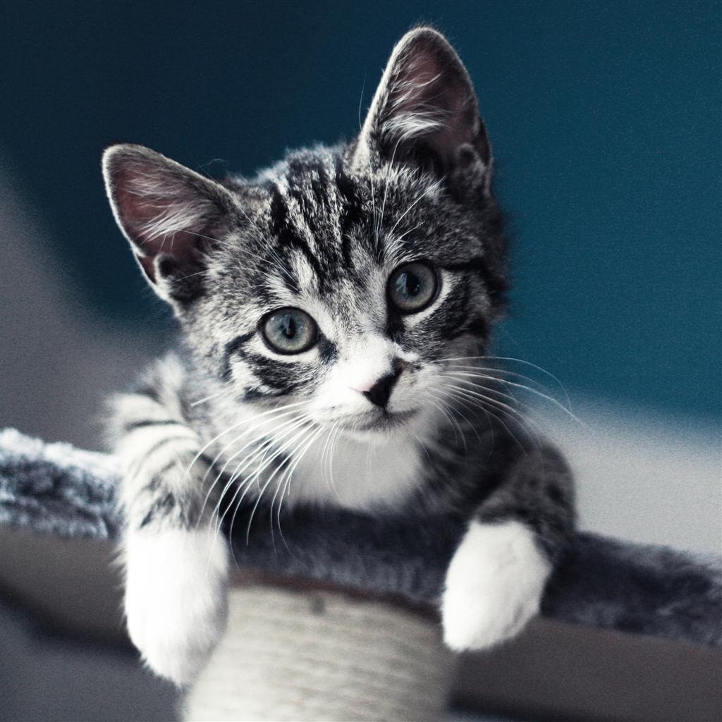 47 Cat Wallpaper For Ipad On Wallpapersafari