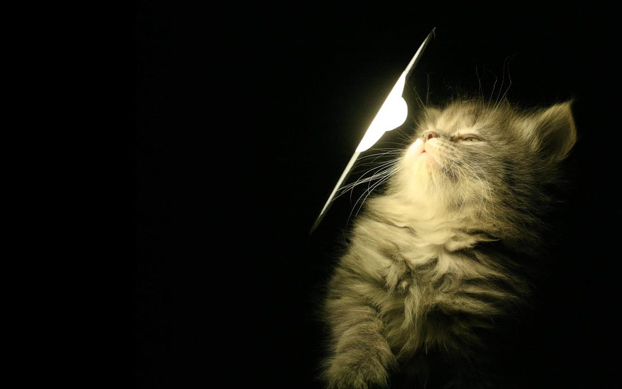 Cute Cat Tumblr Wallpaper HD 1280x800