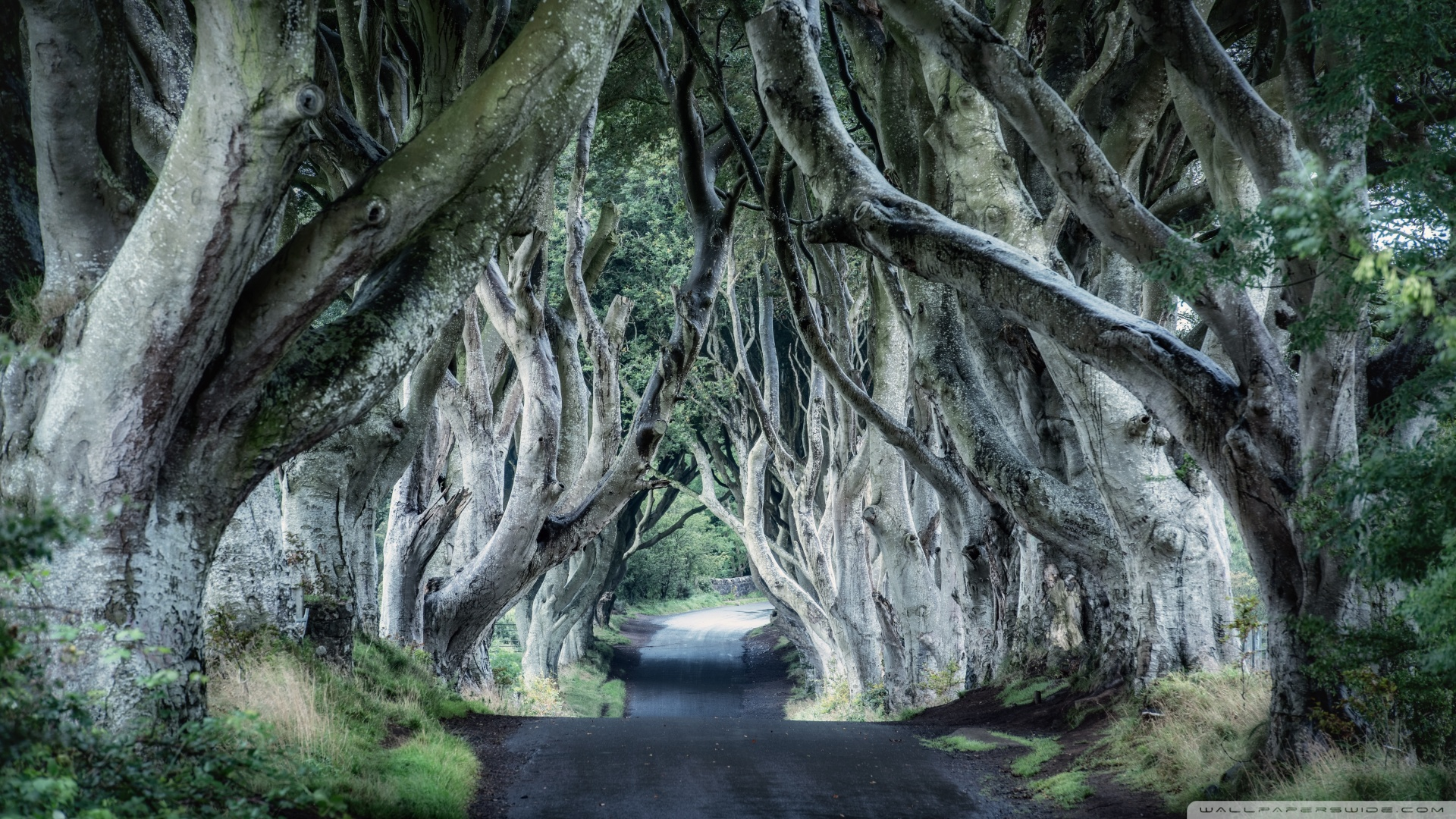 Dark Hedges Northern Ireland 4K HD Desktop Wallpaper for 4K 1920x1080